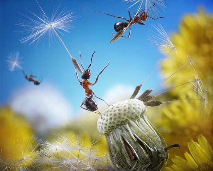 Imagem de Formigas voando