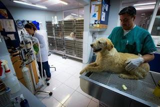 kiểm tra sức khỏe định kỳ cho vật nuôi