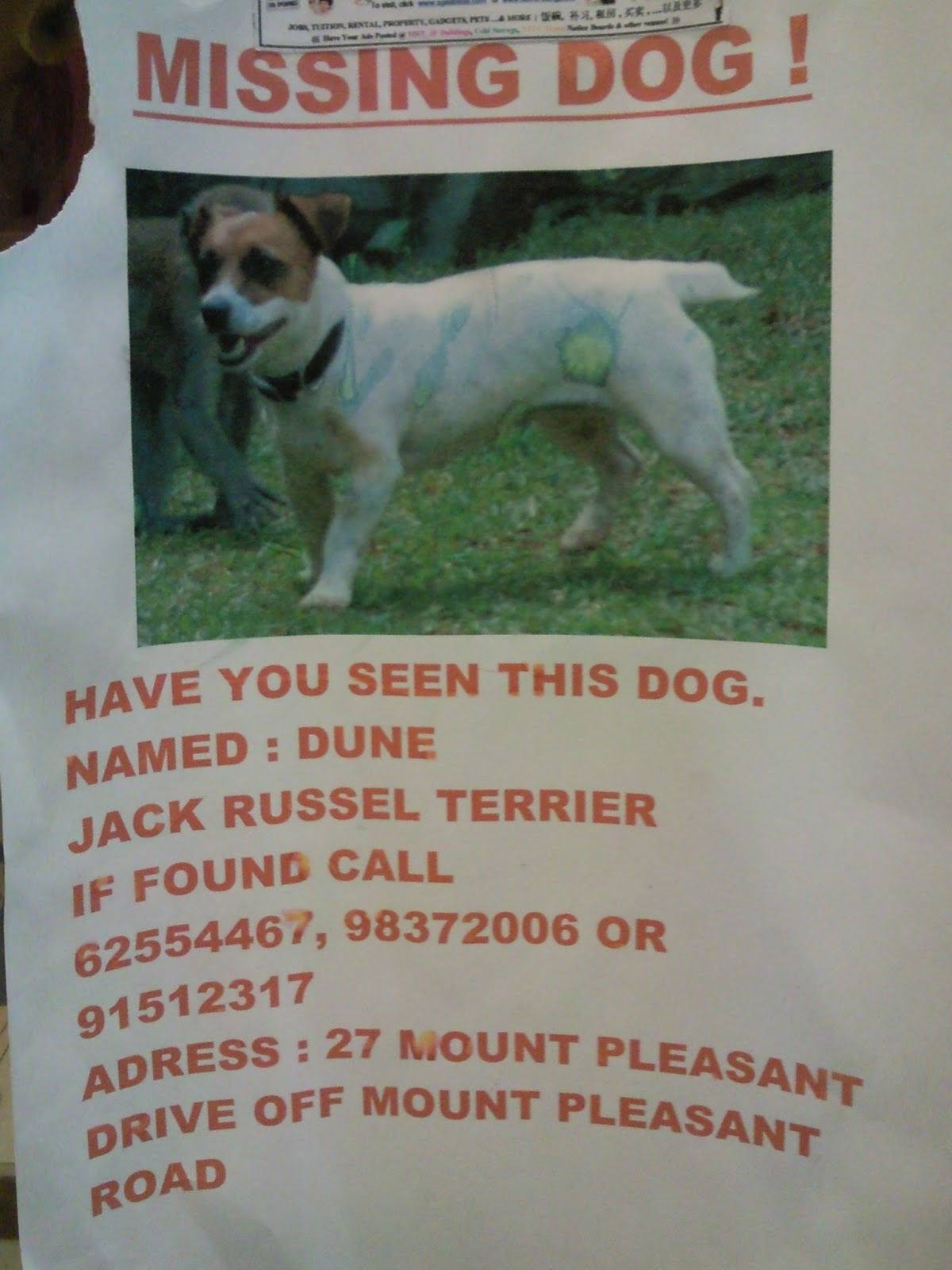 flyers advertising  lost animals and pets announcements in singapore