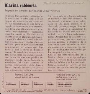Blog Safari Club, características de la Blarina rabicorta