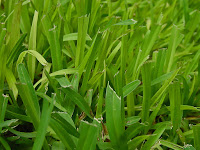 St. Augustine Grass Fertilizer