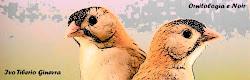 Blog dello scrittore e ornitologo Ivo Tiberio Ginevra