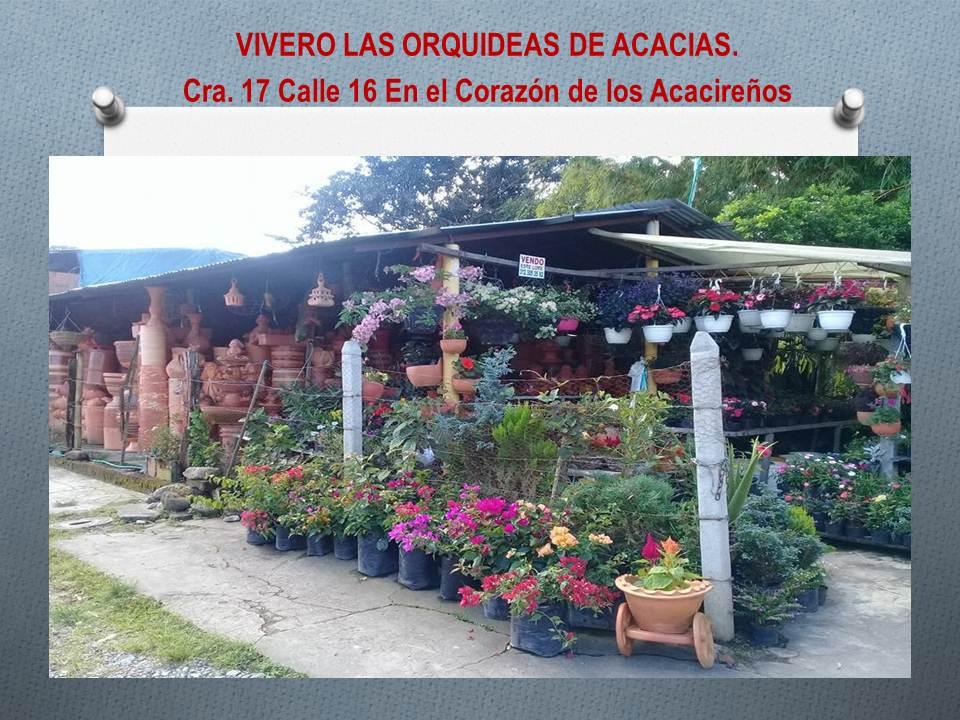 PLANTAS ORNAMENTALES Y MUCHO MAS