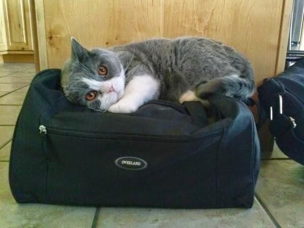 Я думаю, мой кот не хочет, чтобы я уезжал