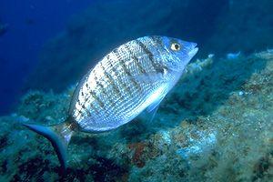 Image result for lisbona acquario oceanografico