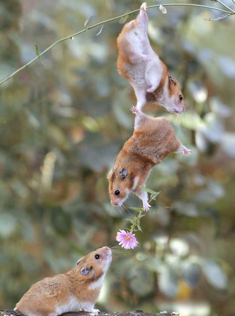 50 imagenes de animales chistosos geniales Taringa! - imagenes chistosas de mascotas
