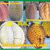 Khasiat Durian Menoreh