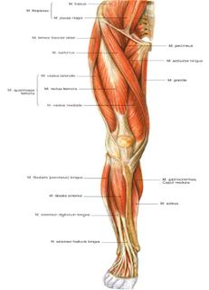mekanisme kerja masing-masing hormon steroid