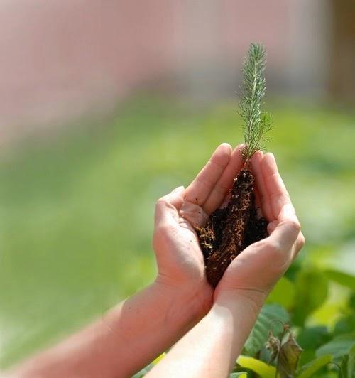 conseils de jardinage