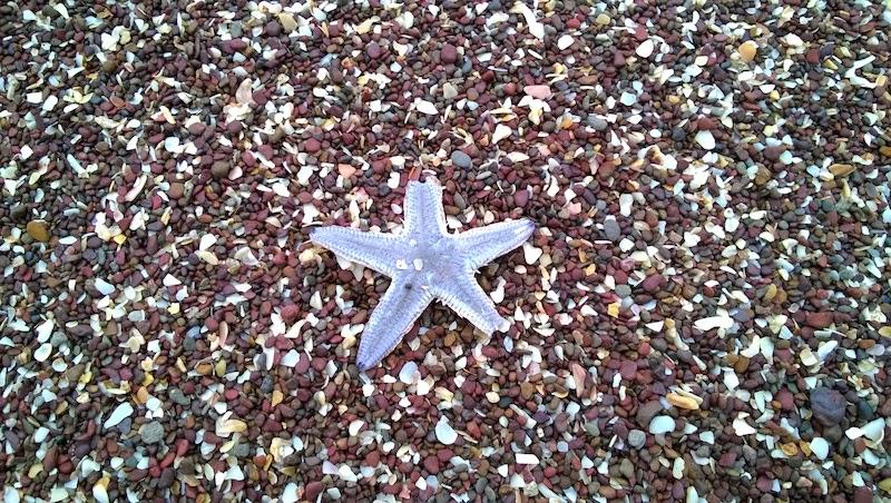 Dead starfish on konkan's beaches