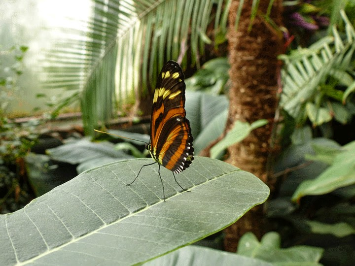 tropical orange butterfly