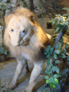 stuffed lion in zoobic safari