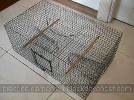 House Sparrow Trap Homemade Sparrow Trap