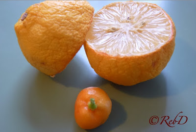 ituskuren citron och calamondin. foton: Reb Dutius