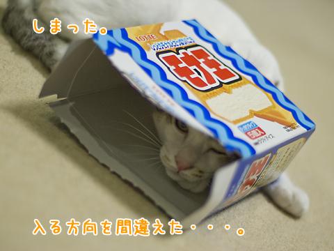 アイスの空き箱が好きな子猫