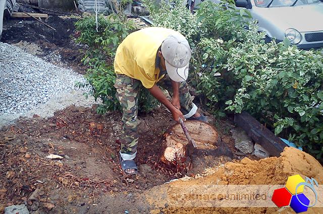 mknace unlimited™ | proses buang tunggul kelapa