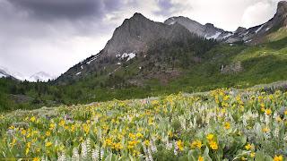 flores silvestres  y montaña