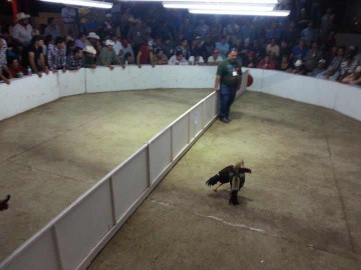 Palenque Cienega de Flores Derby 1ro de la Temp 2013