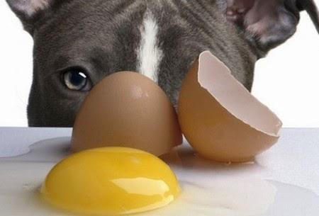 10 Alimentos Prohibidos para las Mascotas