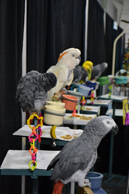 Display of parakeets at pet expo