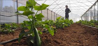 Konyalı çiftçilere hibe destekli sebze serası