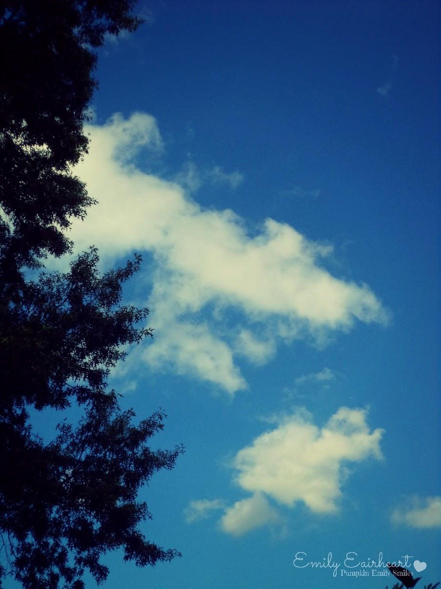 Clouds that look like a crocodile or a shark.