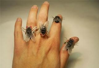 ماهو تجمع الذباب الرغم نظيف؟