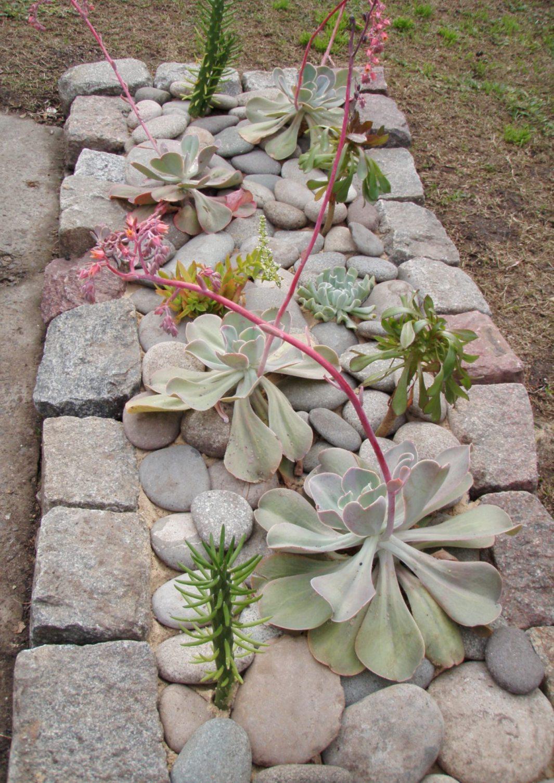 Jardines de cactus y suculentas paso a paso el hermoso for Cactus y suculentas
