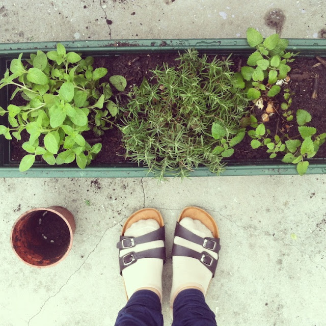 mint and rosemary in green planter box on hong kong rooftop