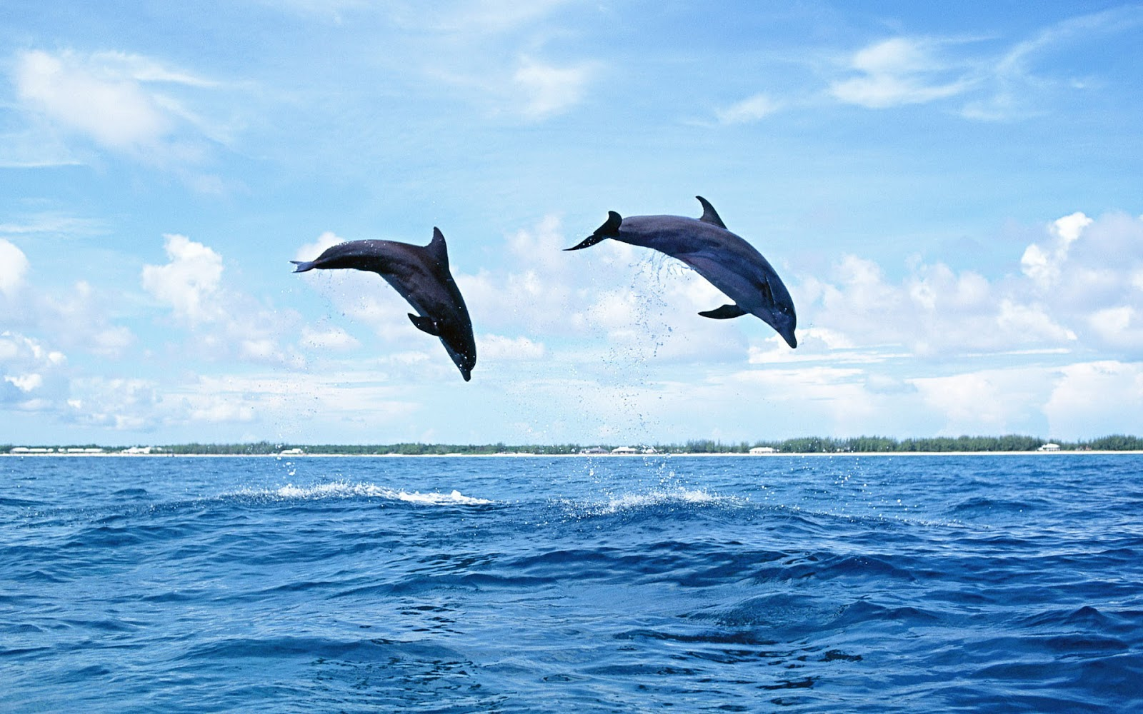 hd dolphins wallpapers and photos hd animals wallpapers