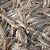 Doen zoute en zoete spiering het nog met elkaar ondanks de Afsluitdijk