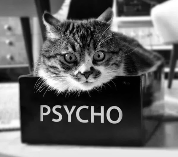 Funny cats - part 82 (40 pics + 10 gifs), cat photo, cat sits in a box with label psycho