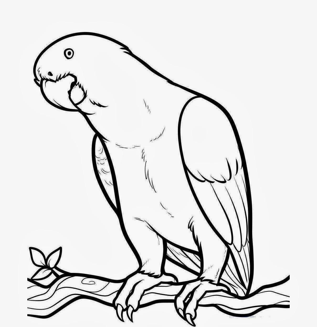 Coloring pages quail - Quail Coloring Pages