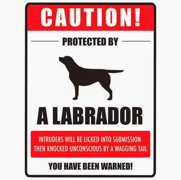Labrador Dog Warning Sign  Funny Joke Pictures. Denver Broncos Signs. Bedroom Signs. Hard Signs. Pre Diabetic Signs. Shopping Mall Signs. Gymnasium Signs Of Stroke. Shiny Foot Signs. Epitome Signs