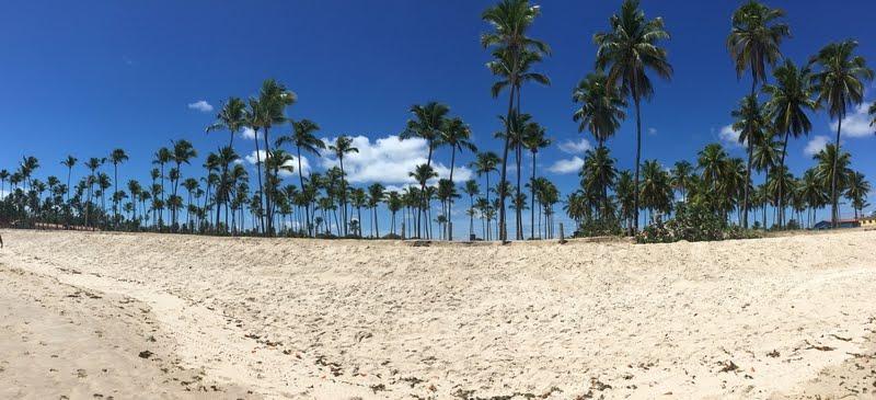 Salve a terra dos altos coqueiros...
