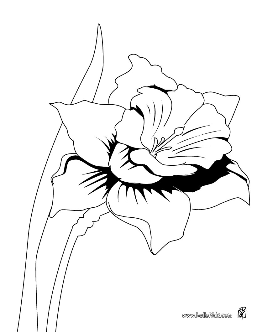 daffodil coloring pages