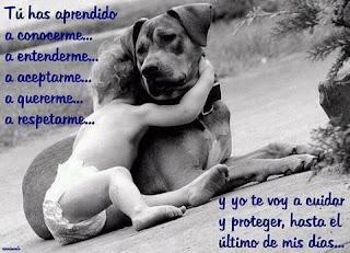 Amar a los animales