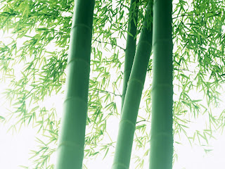 Bamboo Wallpapers - Nature Bambo Wallpaper