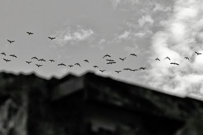 Os sonhos vão e voltam em bando, by Guillermo Aldaya / PhotoConversa