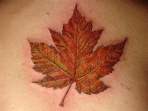 This is my tattoo leaf tattoo designs for Canadian leaf tattoo designs