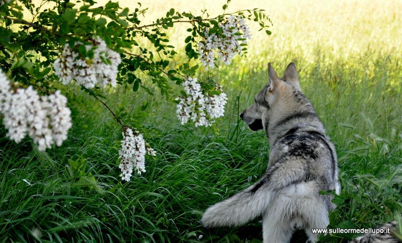 Il fascino ... della Natura