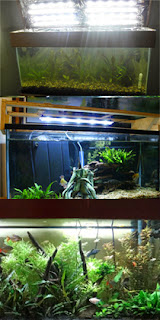 Aquarium Ich Prevention, Lighting