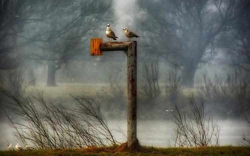 Pajarillos en la niebla del parque by Boris Frkovic
