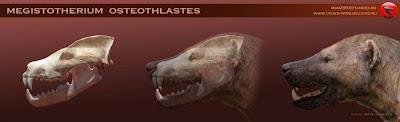 Megistotherium skull