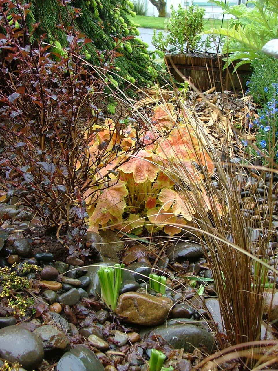 Oregon Coast Gardener: Winning Combinations