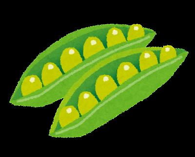 えんどう豆のイラスト