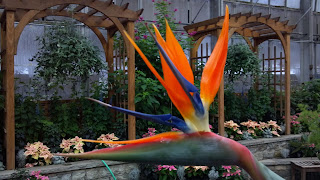 bird of paradise of flower