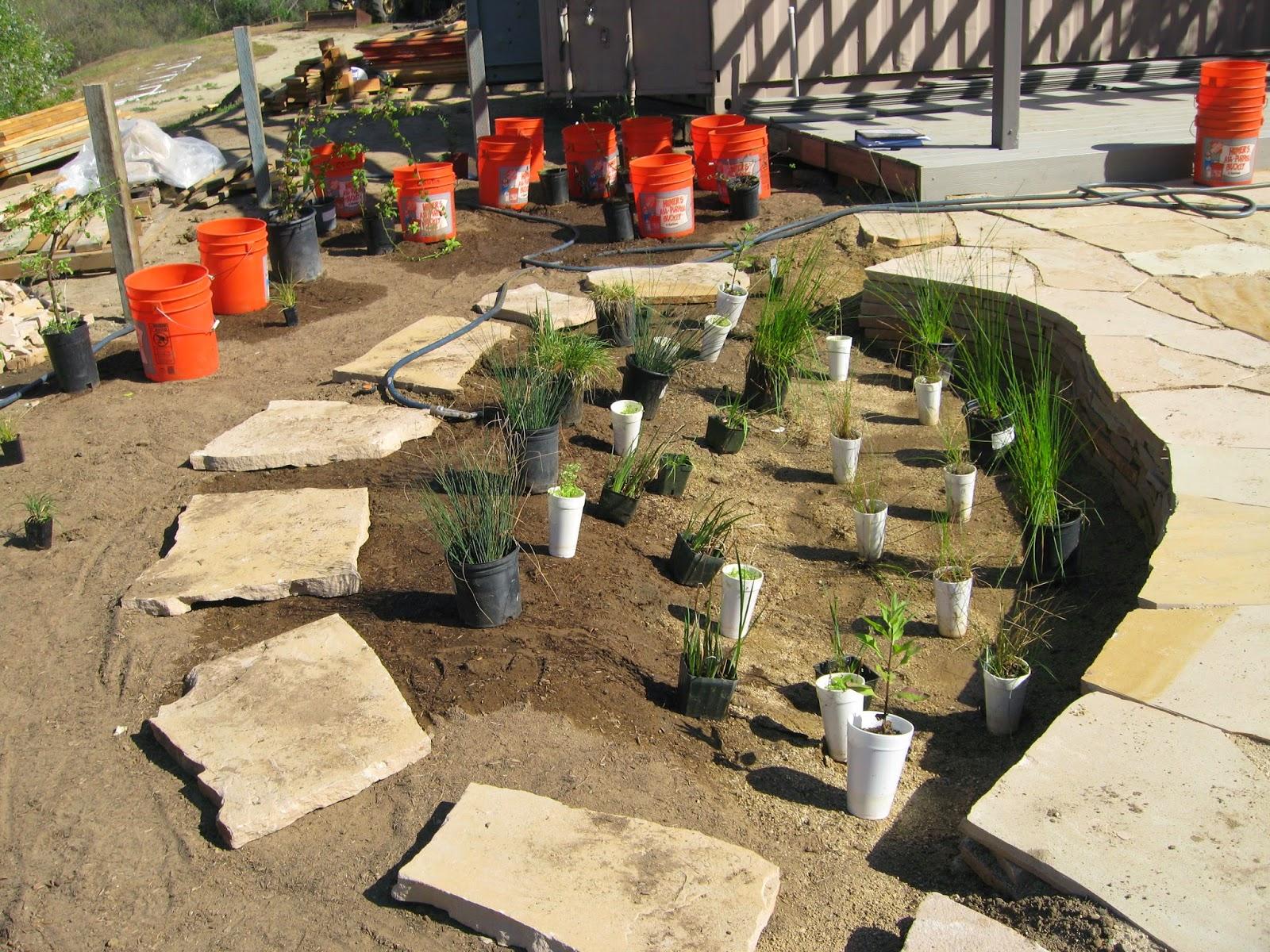 Native Plants at CSU Dominguez Hills: Harvesting Rain: Consider ...