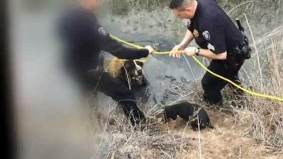 Little Dog, Big Rescue: Hero Dachshund helps save St. Bernard