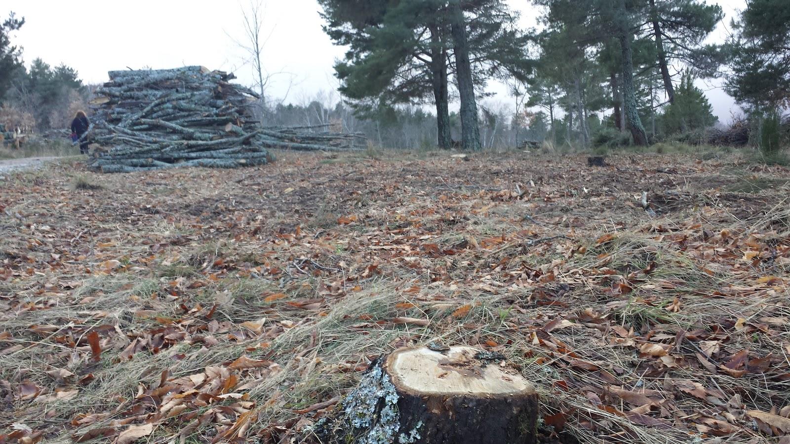 imagene de la tala masiva realizada en el parque de los pinos